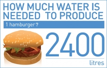 http://www.fao.org/fileadmin/user_upload/newsroom/photos/220_water_hamburger_graphic.gif